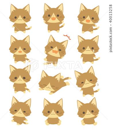 Cat 40013258
