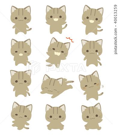 Cat 40013259