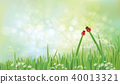 Vector ladybirds on grass,  green background. 40013321