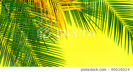 Tropical Palm Leaves Yellow Background Flat Lay Stock Photo 40016024 Pixta Beautful sunlight and green leaves 4k stock video. pixta