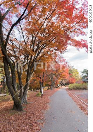Autumn leaves of Mt. Takayama 40016918
