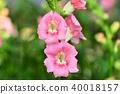 금어초 꽃 40018157
