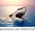 Great white shark 40023439