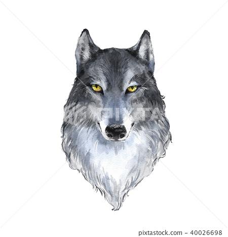 Wolf . Watercolor illustration 40026698
