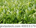 A tea room 40033170