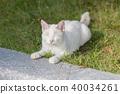 貓 貓咪 毛孩 40034261