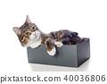 고양이, 애완동물, 상자 40036806