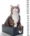 고양이, 새끼, 애완동물 40036809