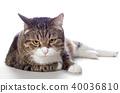 고양이, 새끼, 애완동물 40036810