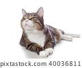 고양이, 새끼, 애완동물 40036811