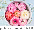 Beautiful pink ranunculus in bowl with water 40039136