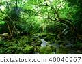 유쯘 강 숲 40040967