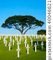 Manila American Cemetery and Memorial Big Tree 40046621