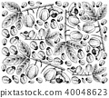 Hand Drawn of Ackee Fruits on White Background 40048623