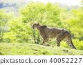 아름다운 초원의 치타 40052227