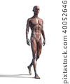 肌肉發達 肌肉 雙位 40052646