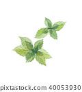 mint, peppermint, japanese 40053930