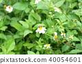 ดอกไม้,ผึ้ง 40054601