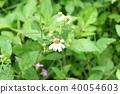 ดอกไม้,ผึ้ง 40054603