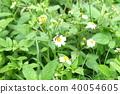 ดอกไม้,ผึ้ง 40054605