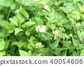 ดอกไม้,ผึ้ง 40054606