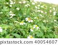 ดอกไม้,ผึ้ง 40054607
