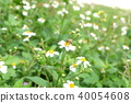 ดอกไม้,ผึ้ง 40054608