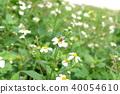 ดอกไม้,ผึ้ง 40054610