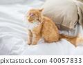 猫 猫咪 床 40057833