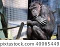 黑猩猩 40065449