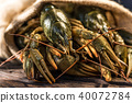 Raw crayfish with beer on wooden background 40072784