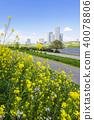 유채 꽃과 타워 아파트 40078806