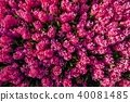 Pink flowers in the gardens 40081485