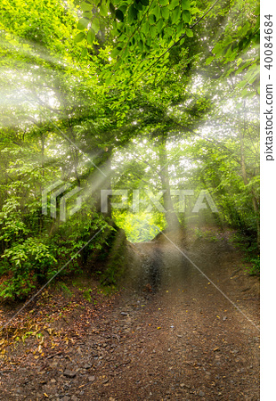 dirt road through beech forest 40084684