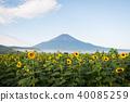 夏季富士和向日葵 40085259