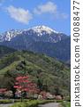 북 알프스 산록 층층 나무 꽃 길 40088477