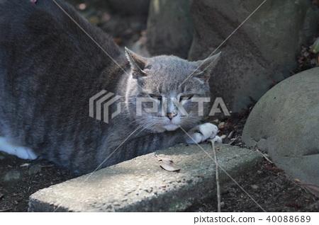 Cat 40088689