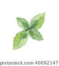 mint, peppermint, japanese 40092147