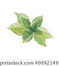 mint, peppermint, japanese 40092149