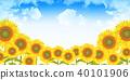 sunflower, sunflowers, summer 40101906