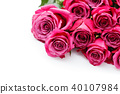 pink roses isolated on white 40107984