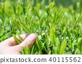 茶葉質量檢查 40115562
