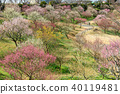 hamamatsu flower park, spring, bloom 40119481
