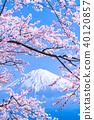 """""""시즈오카 현""""후지산과 만개 한 벚꽃 40120857"""