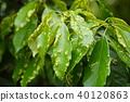 botanic, foliage, leaf 40120863