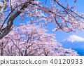 """""""시즈오카 현""""후지산과 만개 한 벚꽃 40120933"""