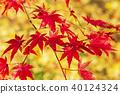 단풍, 가을, 가을 이미지 40124324