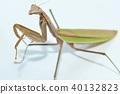사마귀, 벌레, 곤충 40132823