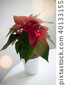 Christmas red flower punch pot in a pot on a white table 40133155