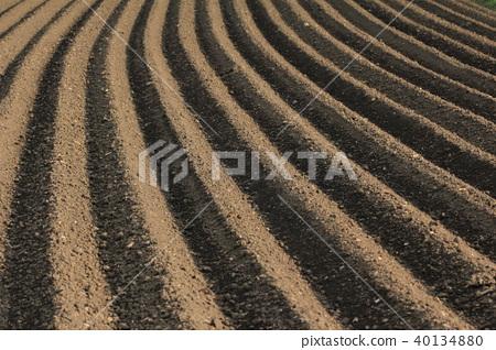 Agricultural cultivation of fertile soil 40134880
